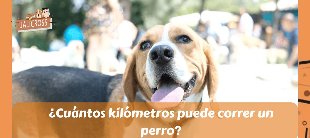 ¿CUÁNTOS KILÓMETROS PUEDE CORRER UN PERRO