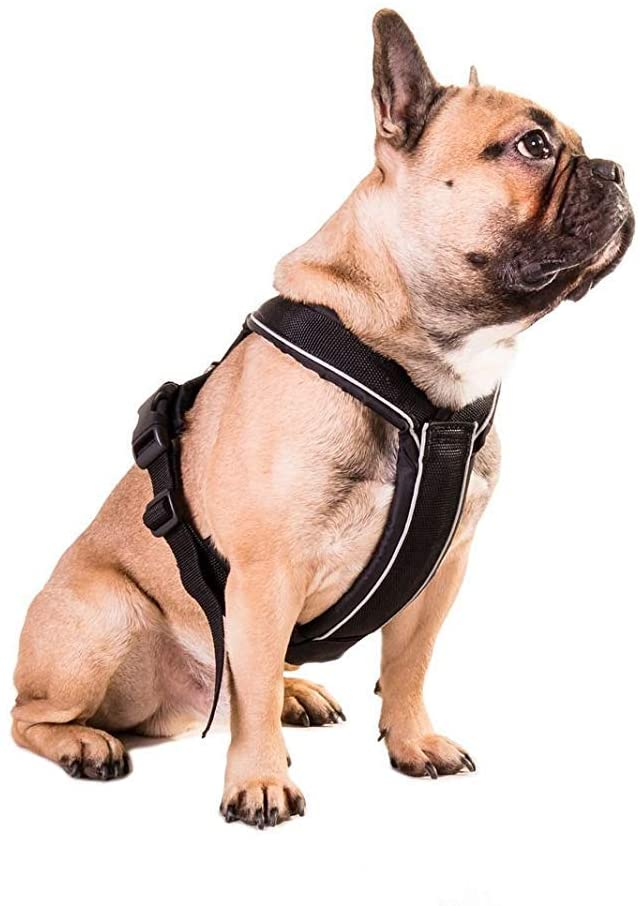 Non-stop dogwear Arnés Acolchado Ajustable