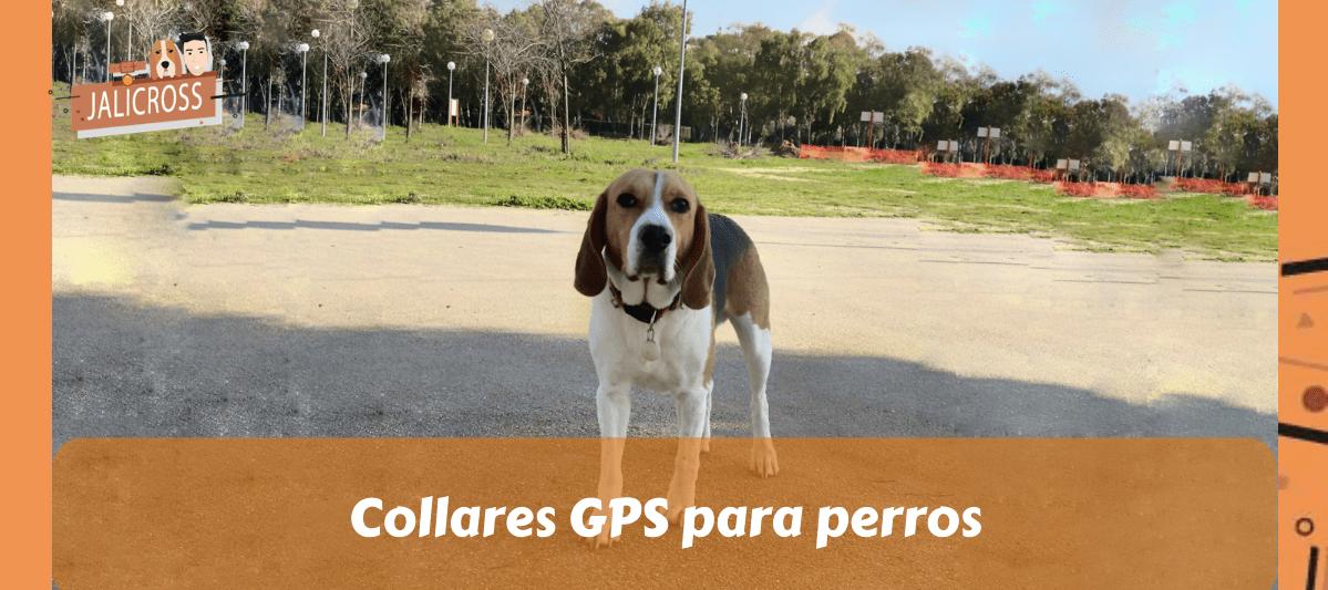 Collares GPS para perros baratos
