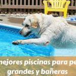 Las mejores piscinas para perros grandes y bañeras