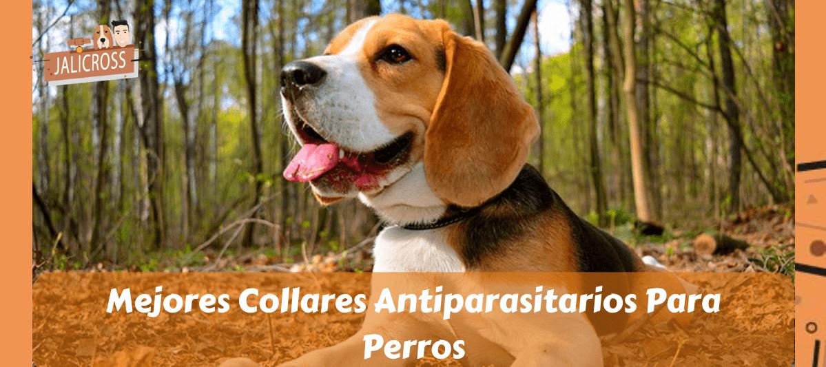 Collares Antiparasitarios Para Perros