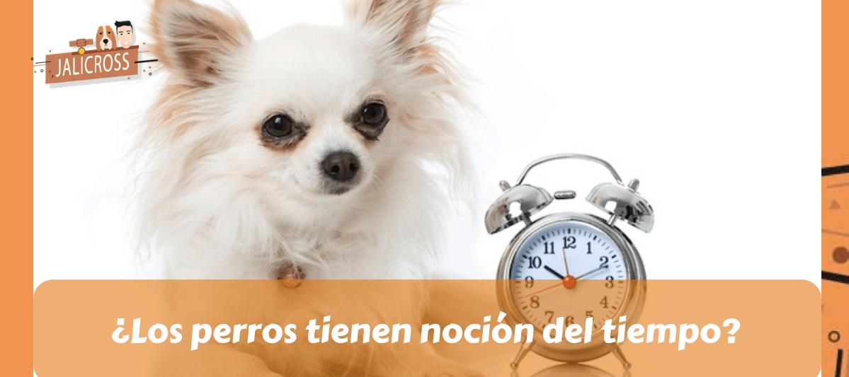 Noción del tiempo en los perros