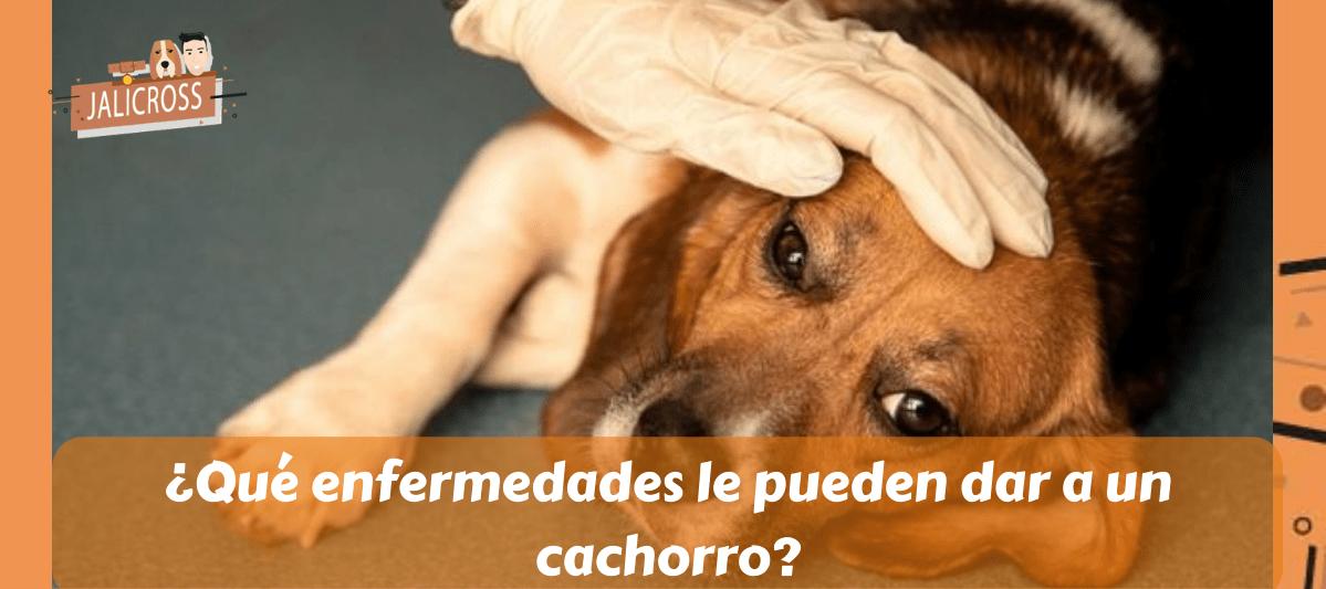 ¿Qué enfermedades le pueden dar a un cachorro?