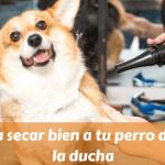 Aprende a secar bien a tu perro después de la ducha