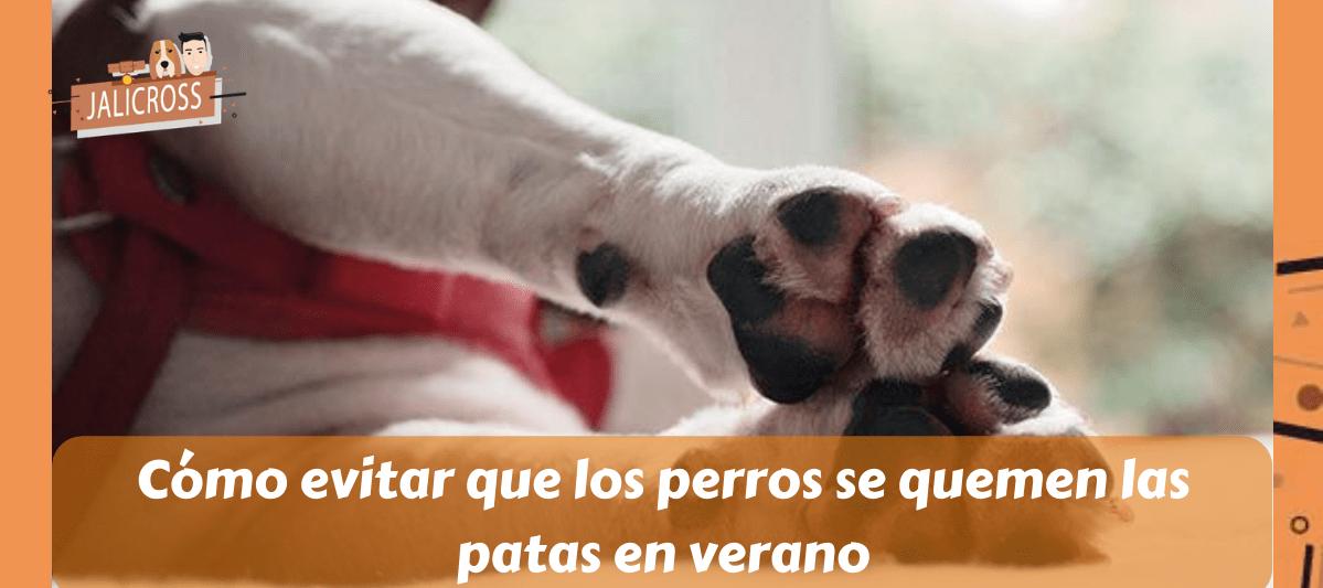 Cómo evitar que los perros se quemen las patas en verano