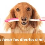 Cómo lavar los dientes a mi perro