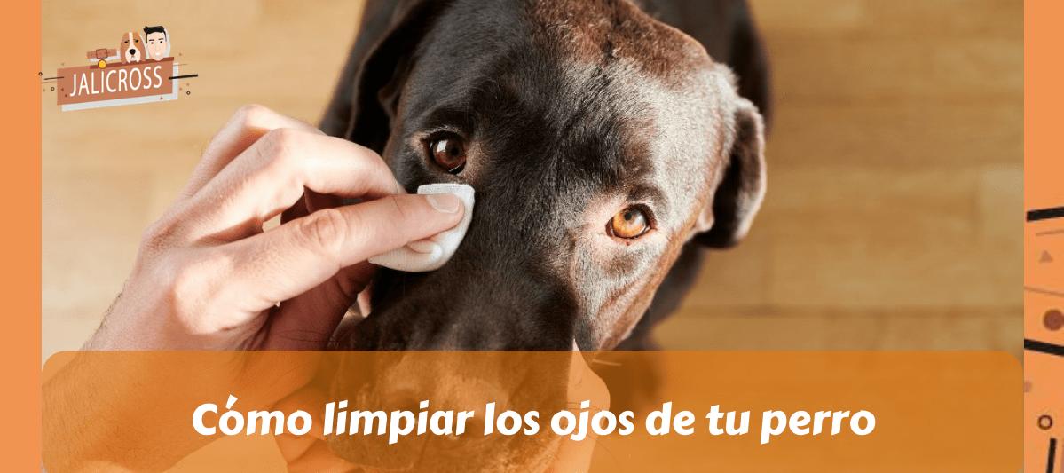 Cómo limpiar los ojos de tu perro