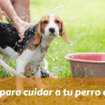 Consejos para cuidar a tu perro en verano