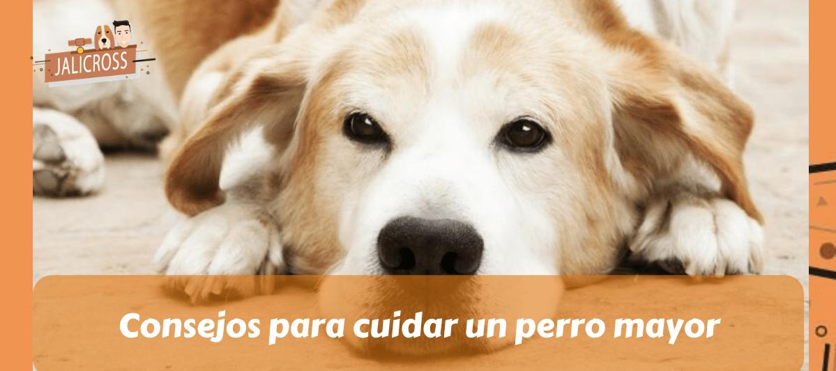 Consejos para cuidar un perro mayor