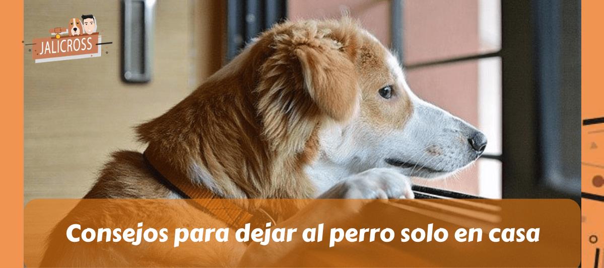 Consejos para dejar al perro solo en casa