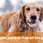 Consejos para el frío en los perros