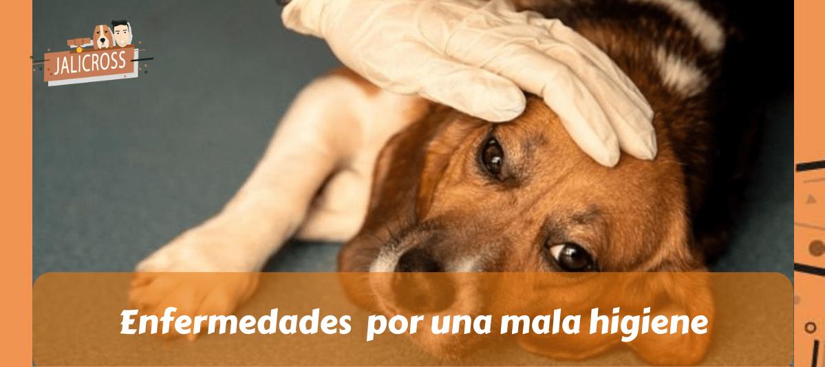 enfermedades por una mala higiene en mascotas