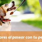 Errores al pasear con tu perro