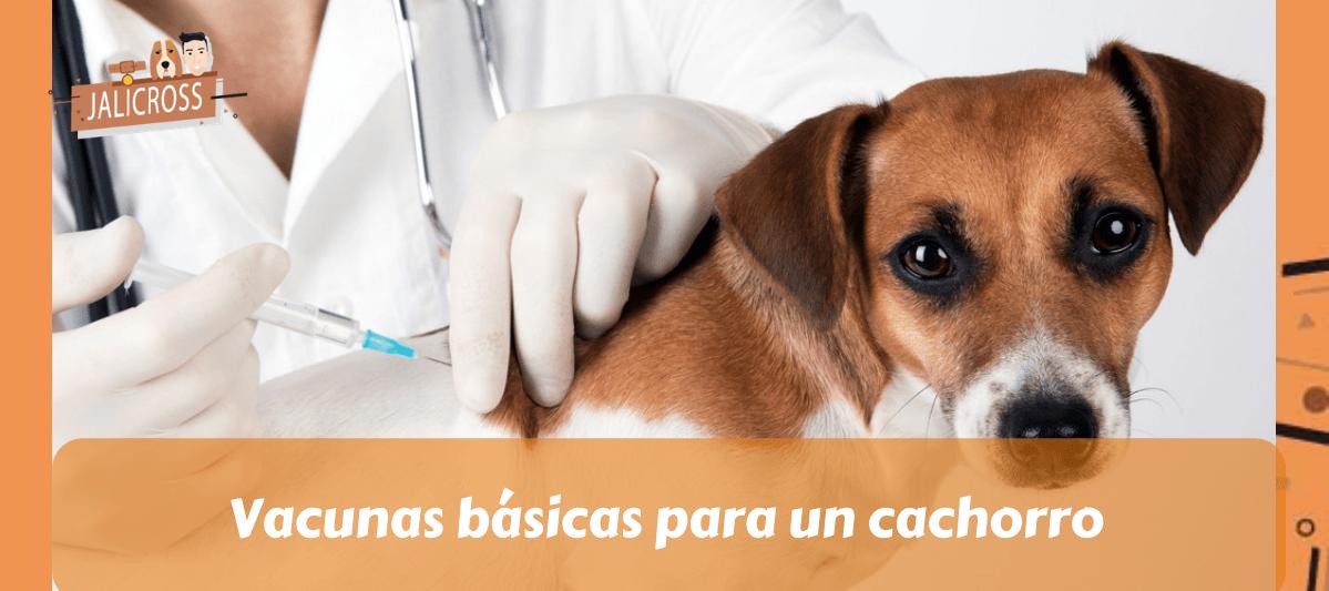 Vacunas básicas para un cachorro