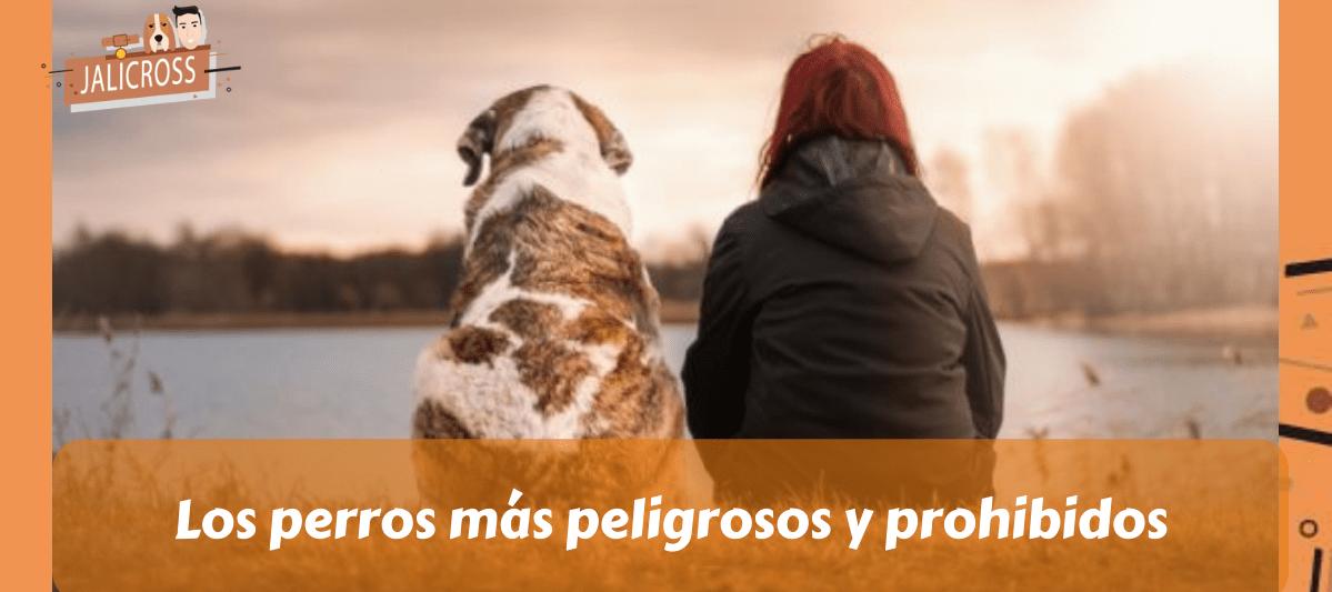Perros más peligrosos y prohibidos